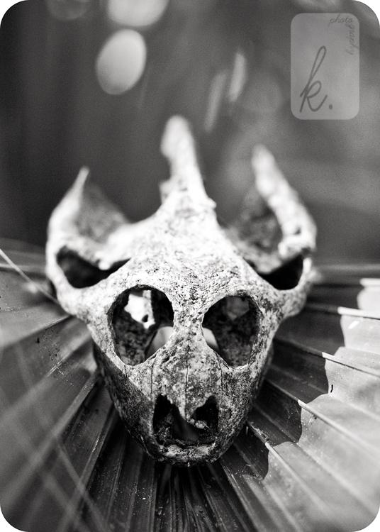 Skull | Kulik Photography | SW Florida Photographer