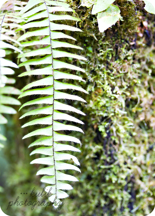 Costa Rica | Tenorio Volcano National Park | Kulik Photography | SW Fl Photographer