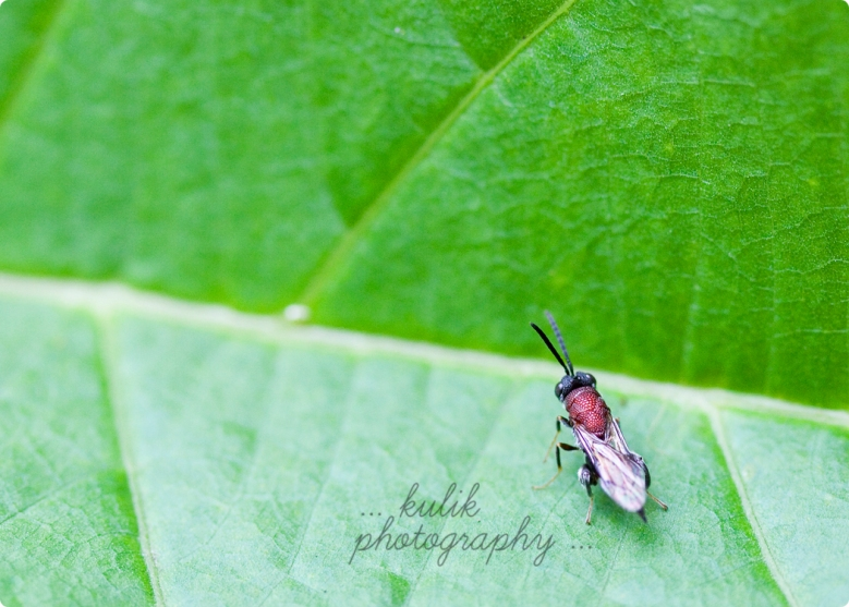 Insect | Costa Rica | Kulik Photography